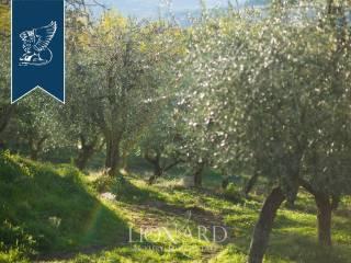 Casale toscano in vendita vicino a Firenze Image 14