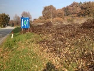 Foto - Terreno agricolo all'asta via Riva Tarugo, Pian di Rose, Sant'Ippolito