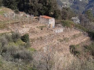 Foto - Rustico 50 mq, Vernazza
