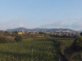 Photo - Farmhouse via di Vermicino, Frascati