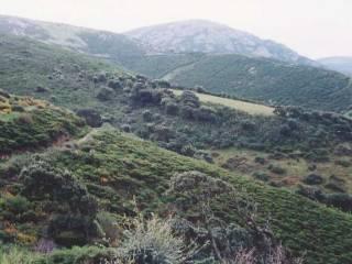 Foto - Terreno agricolo in Vendita a Aggius