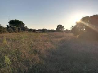 Foto - Terreno agricolo in Vendita a San Donato di Lecce