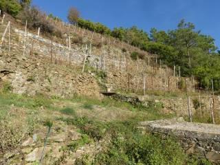 Terreno Vendita Riomaggiore