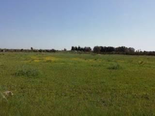 Foto - Terreno agricolo in Vendita a Veglie