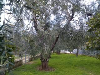 Foto - Bilocale via Santa Maria di Merino, Vieste