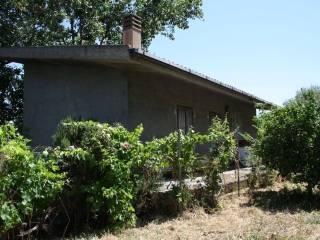 Foto - Terreno agricolo in Vendita a Pozzomaggiore