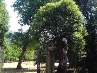 Foto - Casale, buono stato, 20180 mq, San Gregorio Magno