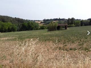 Foto - Terreno agricolo in Vendita a Peccioli
